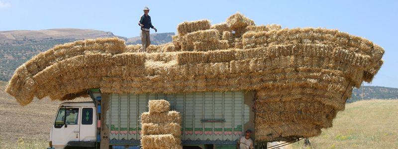 Aziende agricole la cultura della sicurezza sul lavoro